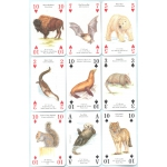Animales de Norteamérica - Animals of North America playing cards