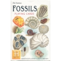 Fósiles - Fossils playing cards