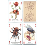 Insectos y Arañas - Insects & Spiders playing cards