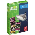 Animal Planet Coral playing cards